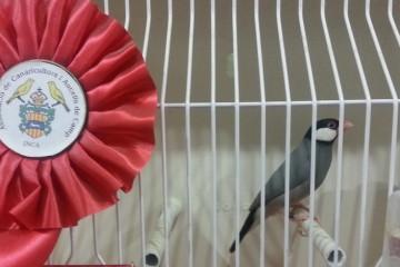 13-11-14-Concurs-Ornitología